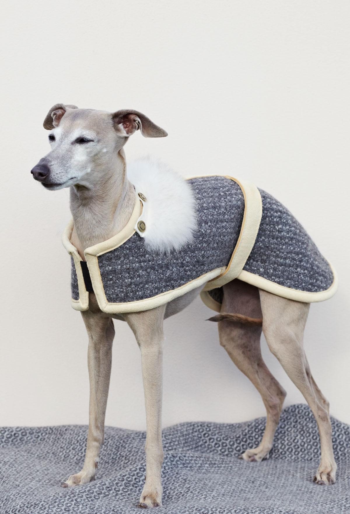 VALOR woolen dog coat lambfur collar KALTERN LUX