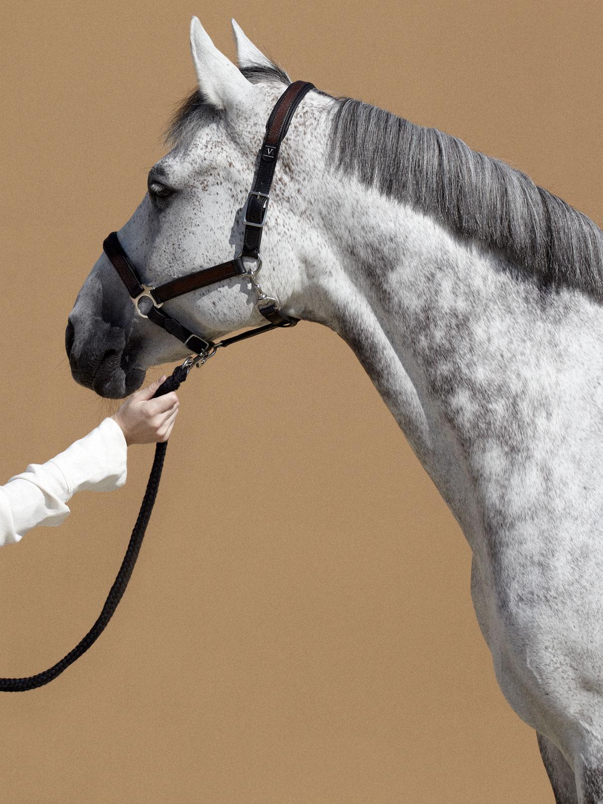 VALOR horse halter in leather SALTO