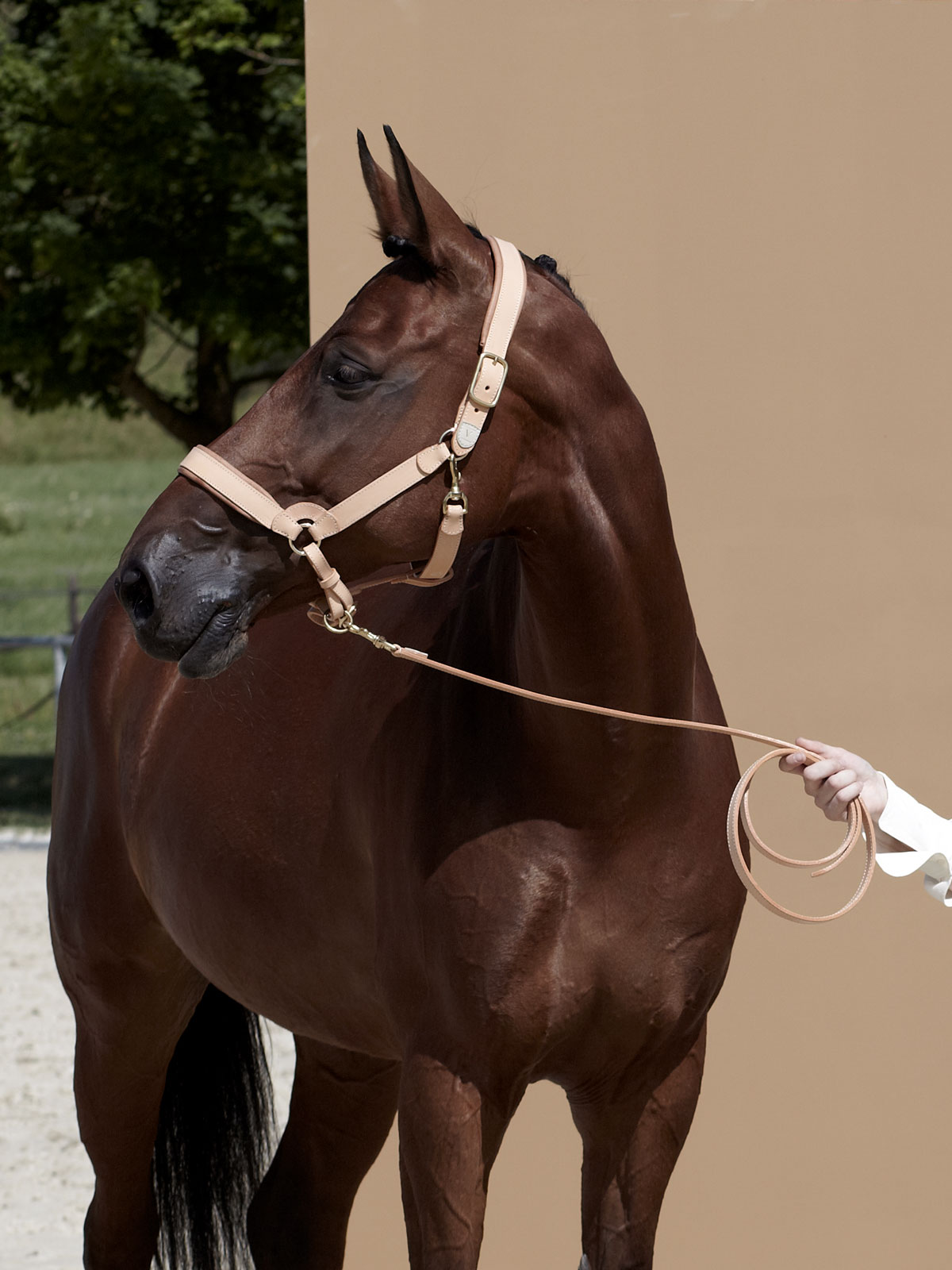 VALOR horse halter in naturally tanned leather LANA