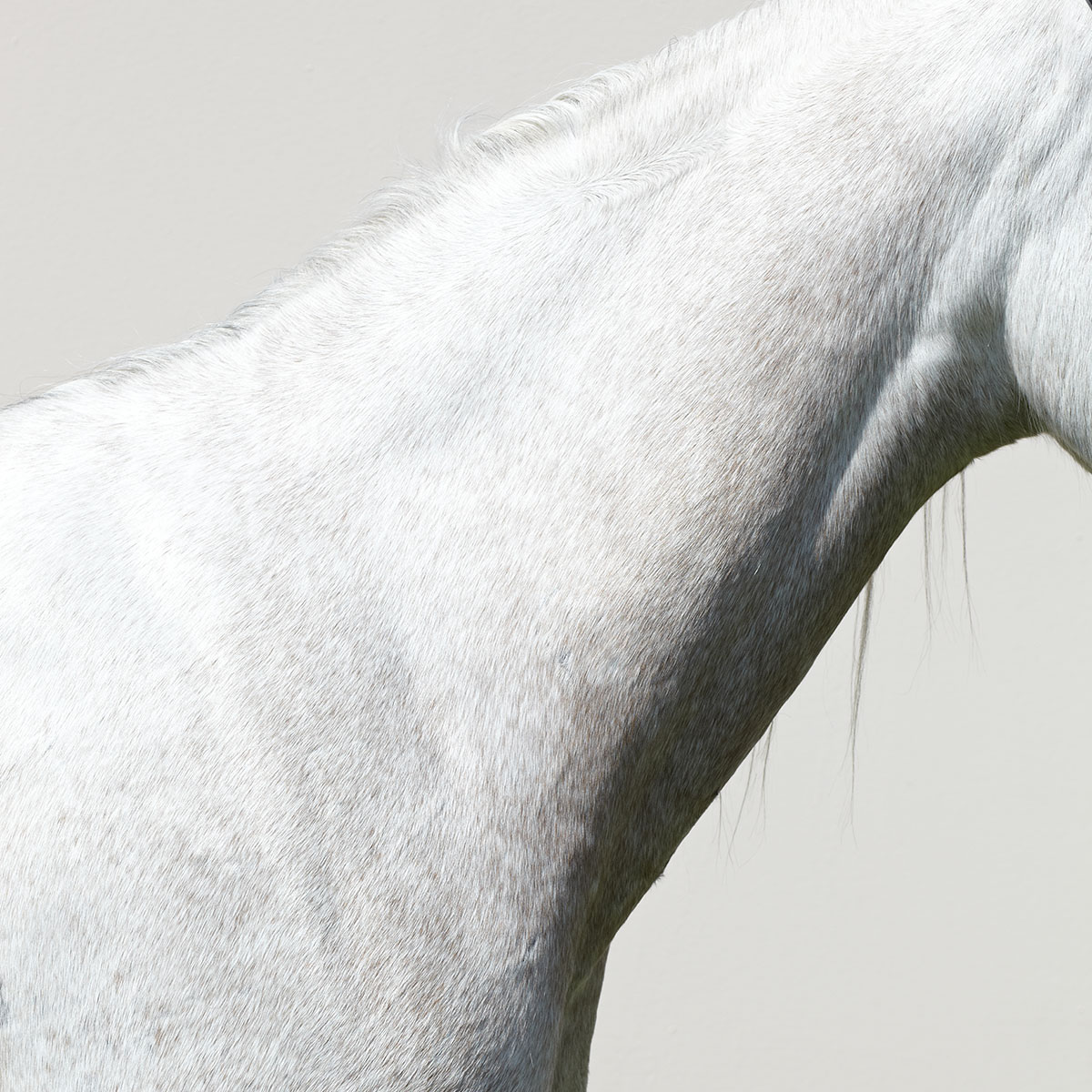 decorative photo with horse