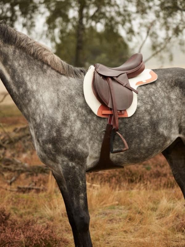 horse saddle pad